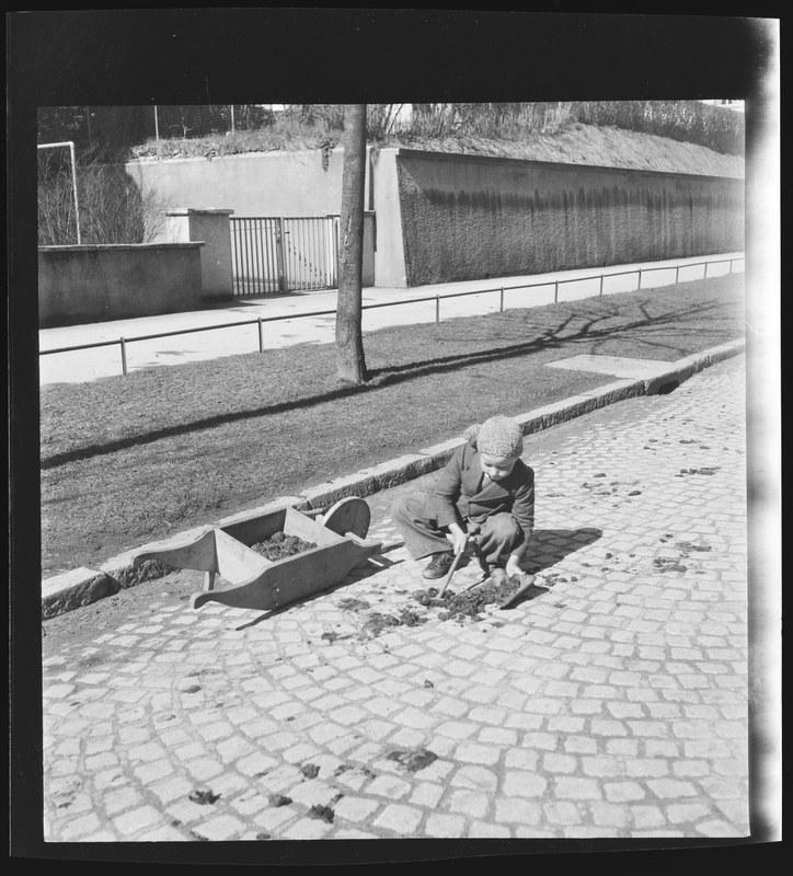 Fredy sammelt Rossmist, 2. April 1942. N Eugen Thierstein 378/13. Vergrösserte Ansicht