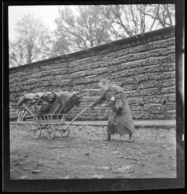 Ältere Frau transportiert Holz ab, das sie von der Gemeinde erhalten hat, 14. November 1943. N Eugen Thierstein 448/70